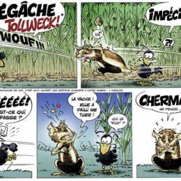 bd-champol-hamster